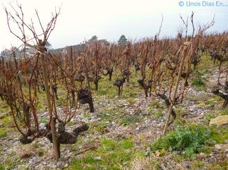 Vignes de Lavaux