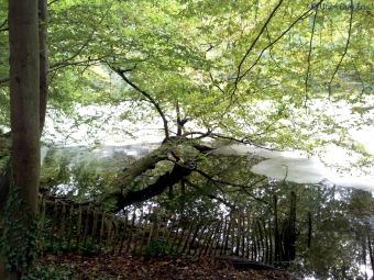 Forêt des Soignes